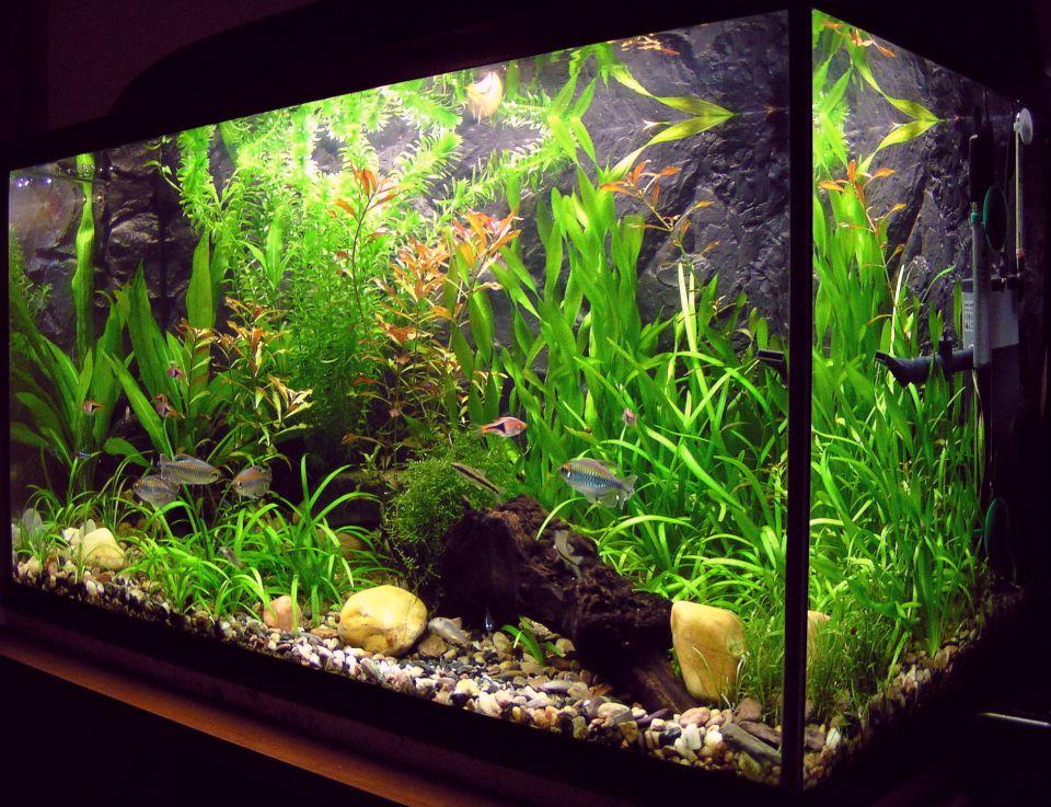 60l Aquarium Besatz Beispiele - Aquarium-Fische-Pflanzen.de
