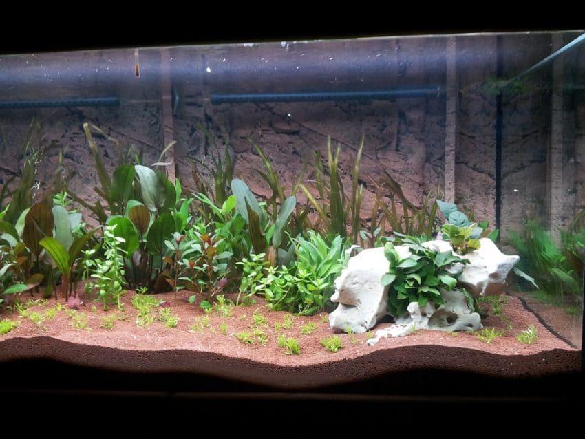 Ca Sinnvoll Aquarium 60 L Mit Led-leuchte