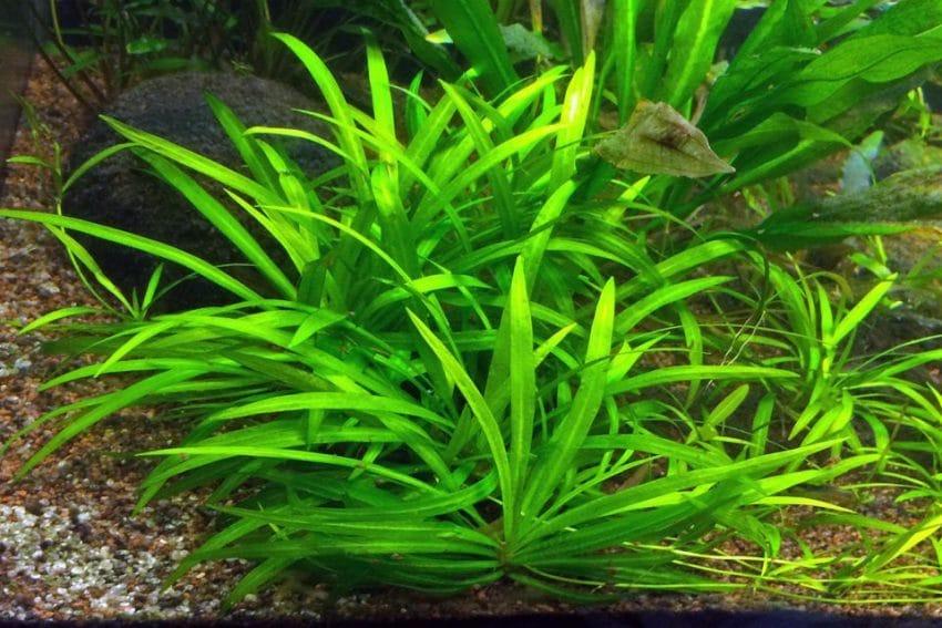 Feinfliedrige Wasserpflanzen