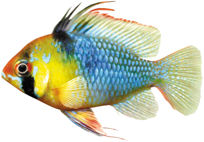Datenschutzerkl rung aquarium fische und pflanzen for Fische aquarium