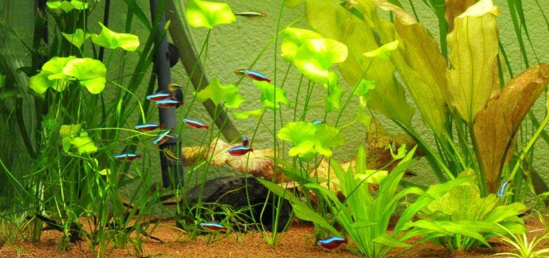 Aquarium Besatz Beispiele: Gesellschaftsbecken