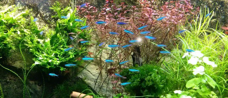 Aquarium Besatz Beispiele: Südamerika Becken