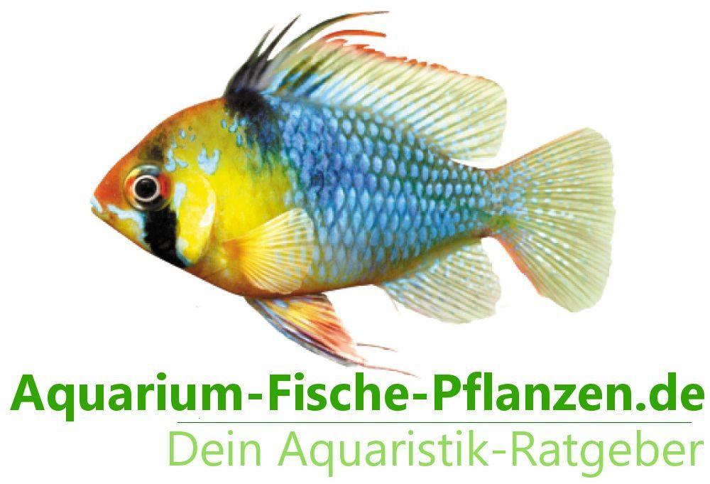 viele Fische passen zusammen
