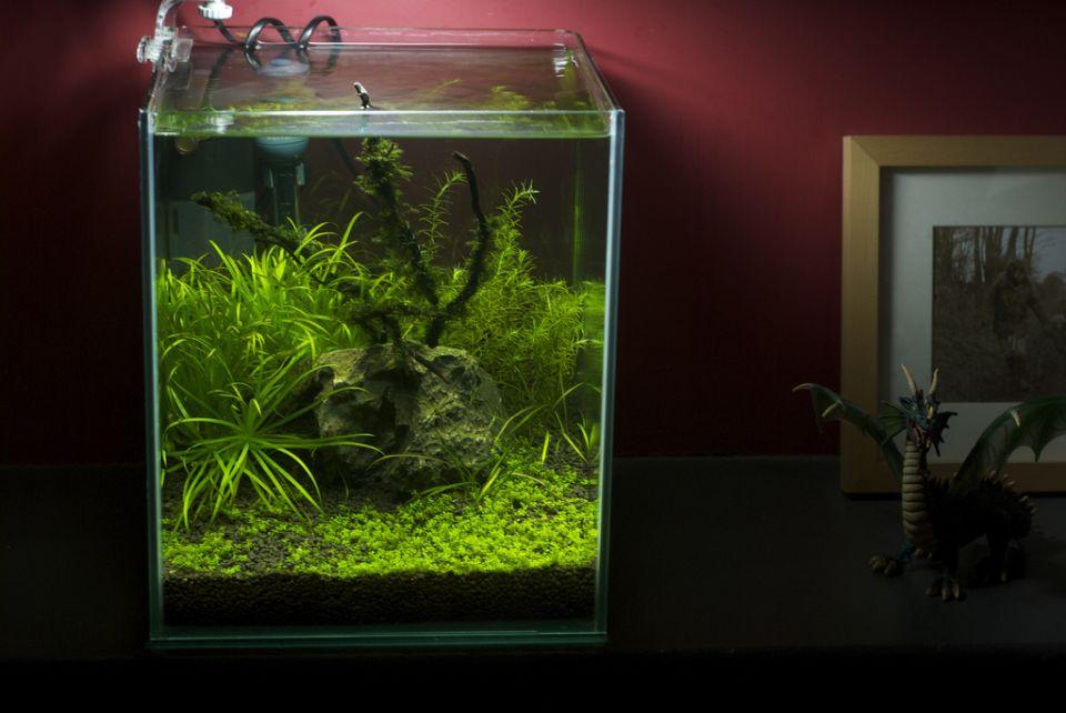Nano Aquarium Besatz Beispiele Aquarium Fische Pflanzen De