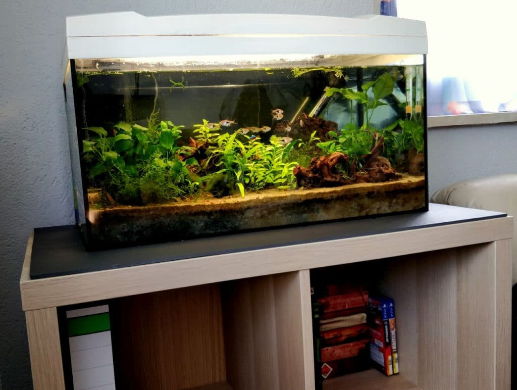 kallax als aquarium unterschrank aquarium fische und pflanzen. Black Bedroom Furniture Sets. Home Design Ideas