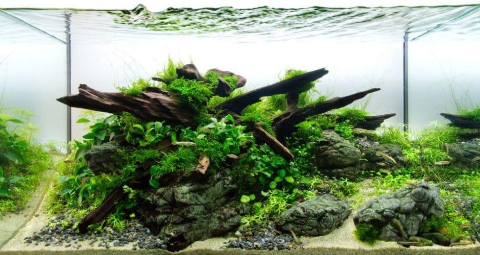 Schön Strukturiertes Aquarium