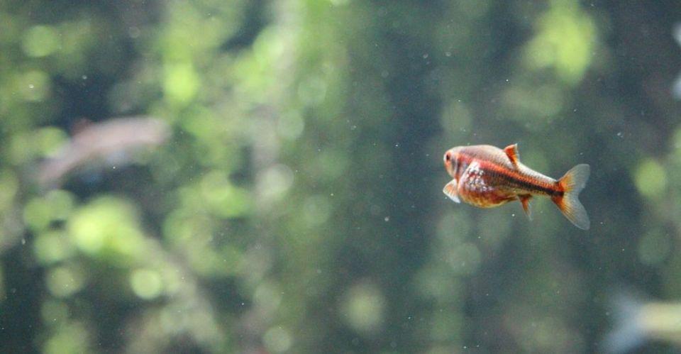 Optimale Besatdichte/Besatzstärke im Aquarium
