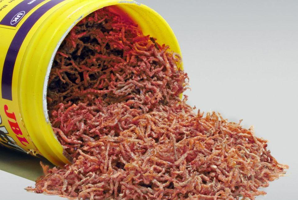 Aquarium Fischfutter Vergleich: trockene Mückenlarven