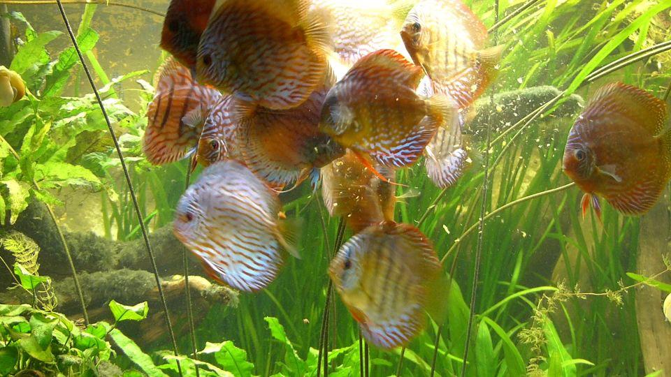 Besatdichte/Besatzstärke im Aquarium