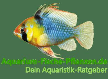 Aquarium: Fische und Pflanzen