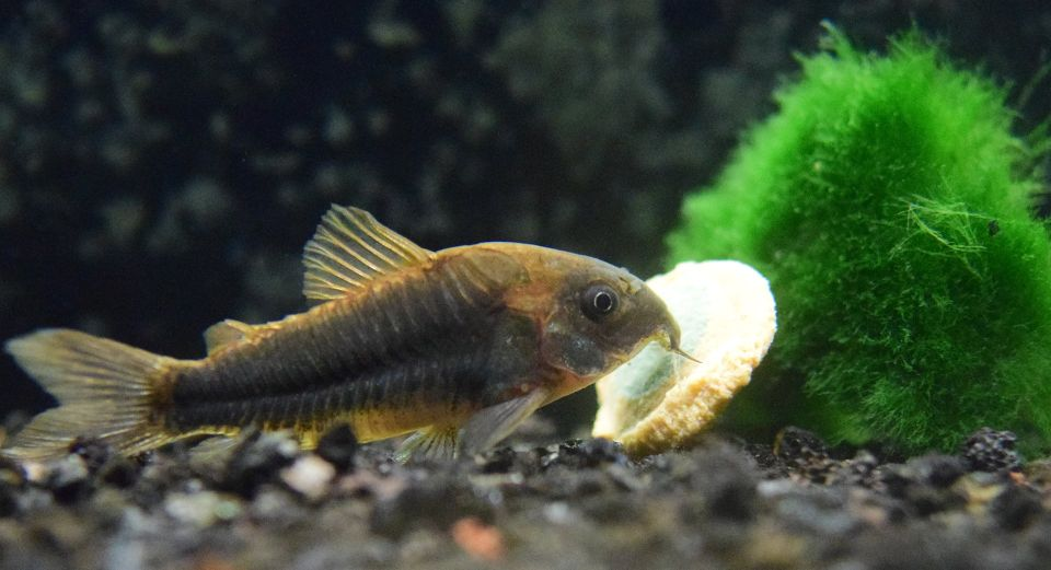 Aquarium Fischfutter Vergleich: Trockenfutter
