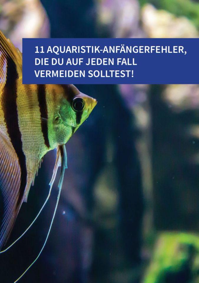 Algen Im Aquarium So Bekampfst Du Sie Aquarium Fische Pflanzen De
