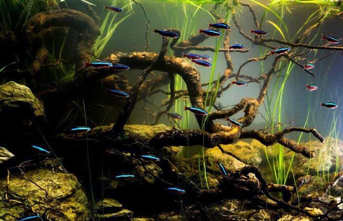 Amazonas_Biotop